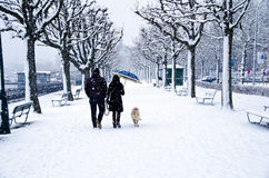 Couple Walking in Snow Storm. Man and woman and pet dog walking in a snow storm, Lake Zurich, Switzerland stock photography