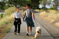 Couple walking their dog Stock Images