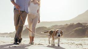 Couple walking their pet dog on beach. Mature couple walking their pet dog on the beach. Dog walking on the beach with couple in morning stock photo