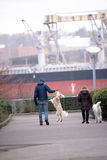 Couple walking with their playful dogs. A couple walks with their large domestic dogs with long hair, who love to play with the owner, on the quay at the Stock Photo