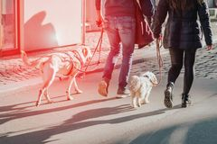 Couple walking with two dogs on the street. Sun glare effect,red toned stock photography