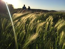 Couple walking through a wheat field stock photo