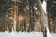 Couple walking in a winter forest Stock Image