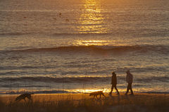 Couple Walks Dogs on the Beach At Sunrise Stock Photo