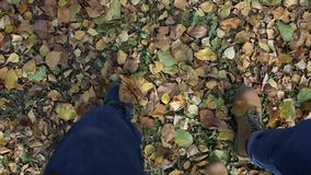 The couple walks through the park and the autumn yellow and green foliage, the top view of the legs and shoes. HD. The couple walks through the park and the stock video