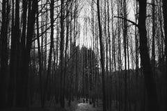 Couple walks on the wood stock photography