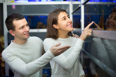 Couple watching fish in petshop Royalty Free Stock Photos