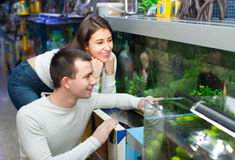 Couple watching fish in petshop Royalty Free Stock Images