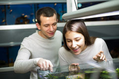Couple watching fish in petshop Stock Photo