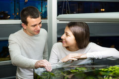 Couple watching fish in petshop Royalty Free Stock Photo