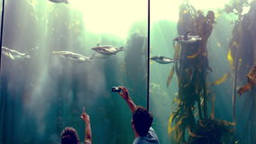 Couple watching at penguins in the fish tank. In slow motion couple watching at penguins in the fish tank stock footage