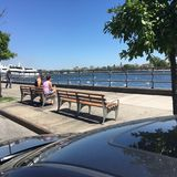 Couple Watching Swans On Emmons Avenue. Sheepshead Bay Brooklyn, New York royalty free stock photo