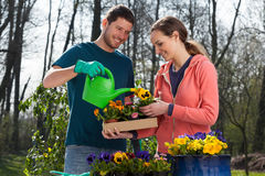 Couple watering pansy flowers Stock Photography