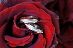 Couple of Wedding Rings in Rose Bud. Couple of Wedding Rings in Red Rose Bud Royalty Free Stock Images