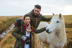 Couple and White Iceland Horse. Couple touching white Iceland horse in field Stock Image
