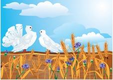 Couple of white pigeons Stock Photos