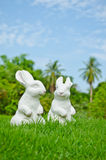 Couple of white rabbit Stock Image