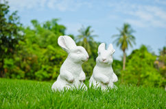 Couple of white rabbit Royalty Free Stock Image