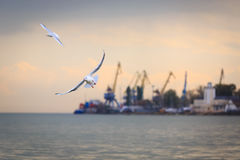 Couple of white sea gulls are flying against the backdrop of the sea port Stock Image