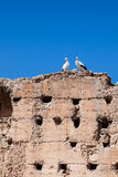 Couple of white storks Stock Images