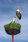 Couple of white storks in nest Stock Images