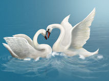 Сouple white swan Royalty Free Stock Image