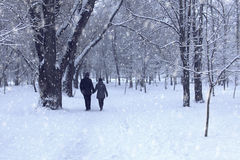 Couple in winter forest Stock Image