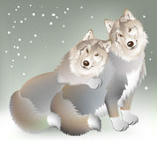 Couple of the wolves gentle loving each other on the background of a cold winter. Stock Image
