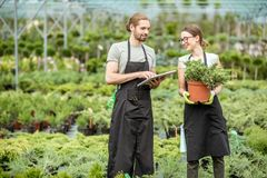Workers with tablet in the greenhouse. Couple of workers in uniform using digital tablet taking care of plants in the greenhouse of the plant shop Royalty Free Stock Photo