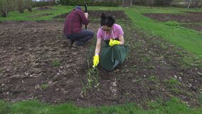 Couple working on field in garden. In summer day stock footage