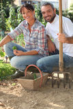 Couple working in the garden Royalty Free Stock Images