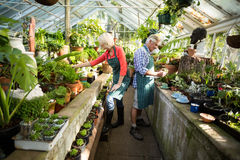 Couple working at greenhouse Stock Photography