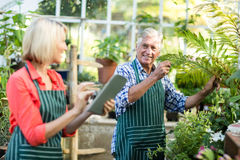 Couple working at greenhouse. Couple smiling while working at greenhouse Royalty Free Stock Image
