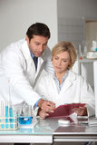 Couple working in a lab. Stock Photo