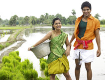 Couple working in a paddy field Royalty Free Stock Image