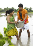 Couple working in a paddy field Royalty Free Stock Photography