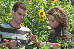 Couple working together in the garden stock photography