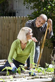 Couple working on vegetable garden in backyard Stock Photo