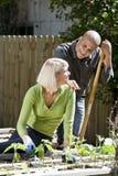 Couple working on vegetable garden in backyard Stock Photo