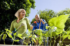 Couple working on vegetable garden in backyard Royalty Free Stock Images