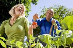 Couple working on vegetable garden in backyard Stock Photography