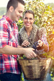 Couple  working in vineyard Royalty Free Stock Image