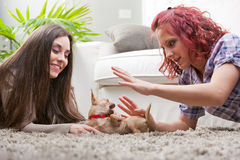 Couple of young women playing with a small dog Royalty Free Stock Image