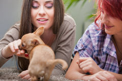 Couple of young women playing with a small dog Royalty Free Stock Photography