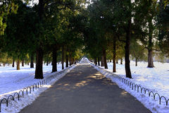 Couples à la fin de route après neige Photos stock