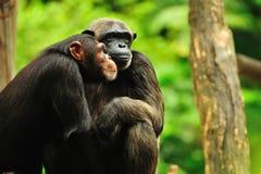 Couples Photo libre de droits