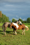 Couples 3 de cheval Photos libres de droits
