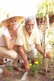Couples aînés détendant dans le jardin Photographie stock libre de droits