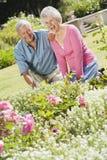 Couples aînés fonctionnant dans le jardin Photos stock
