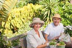 Couples aînés se reposant dans leur jardin Photo stock